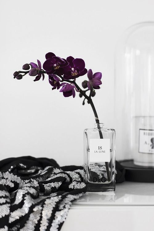 touche végétale déco en noir et blanc