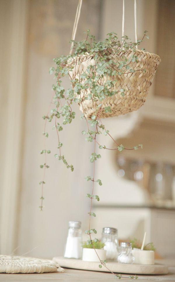 Déco - Panier avec plante