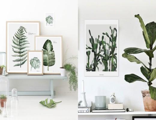 plantes d'intérieur-et-fleurs-dans-la-déco