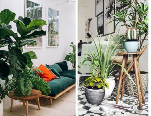 plantes_vertes_interieur