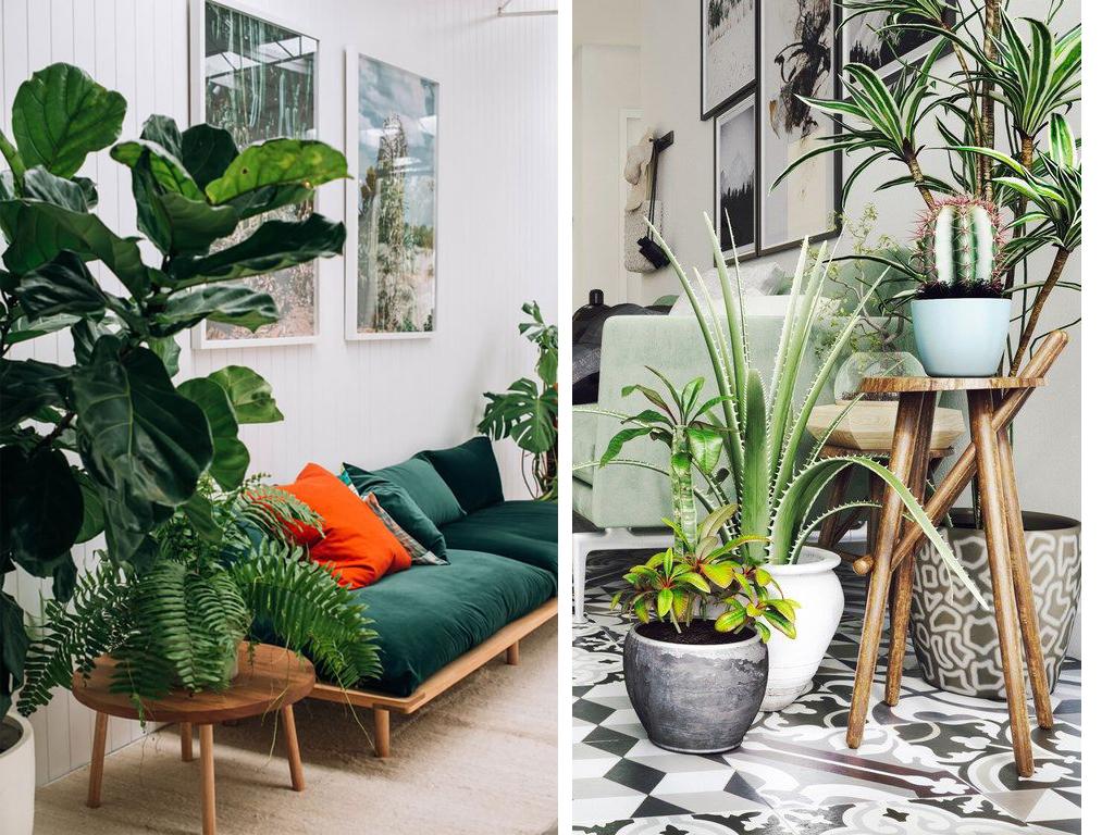 Zoom sur les plantes d int rieur faciles d entretien et tr s d co d coration blogs for Plantes vertes appartement