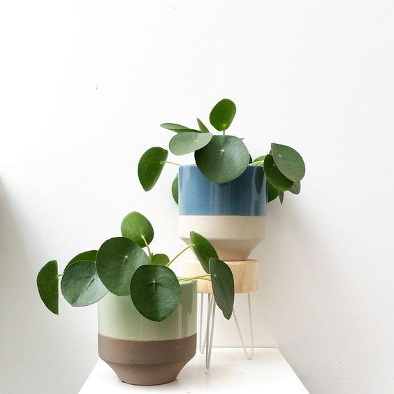 plantes_vertes_interieur_faciles_entretien_astuces_blog_decouvrir_design_15