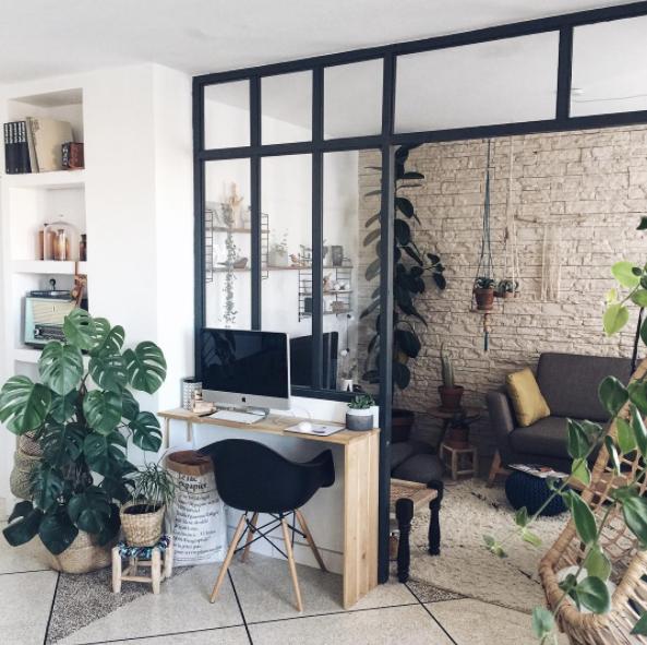 zoom sur les plantes d 39 int rieur faciles d 39 entretien et tr s d co decouvrirdesign. Black Bedroom Furniture Sets. Home Design Ideas