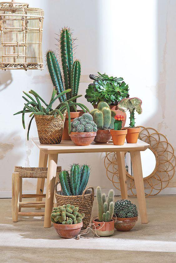 plantes_vertes_interieur_faciles_entretien_astuces_blog_decouvrir_design_18