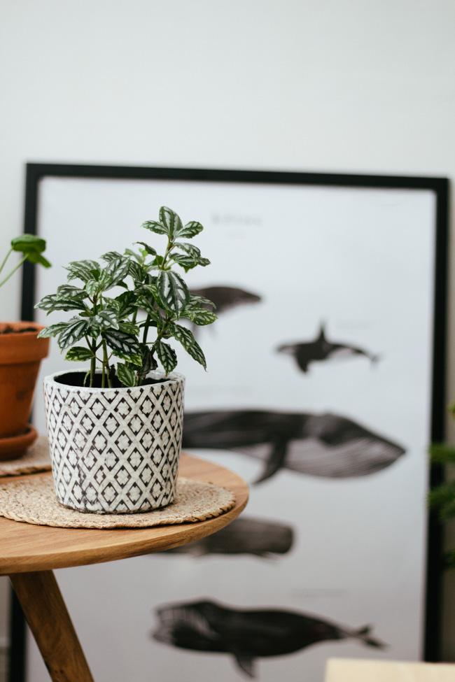 plantes_vertes_interieur_faciles_entretien_astuces_blog_decouvrir_design_3