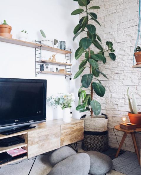 Plantes vertes interieur faciles entretien design de maison for Plantes interieurs