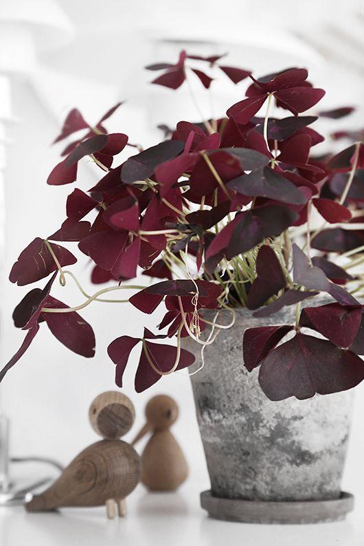 plantes_vertes_interieur_faciles_entretien_astuces_blog_decouvrir_design_9