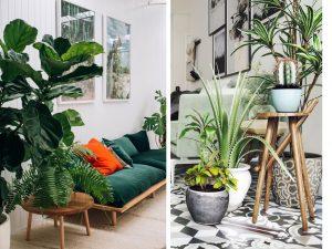 Zoom sur les plantes d 39 int rieur faciles d 39 entretien et for Grande plante d interieur facile d entretien